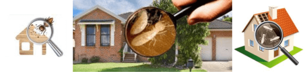 Pre-purchase Termite Inspections
