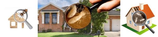 Pre-purchase Termite Inspections