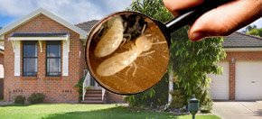 Annual Maintenance Termite Inspections