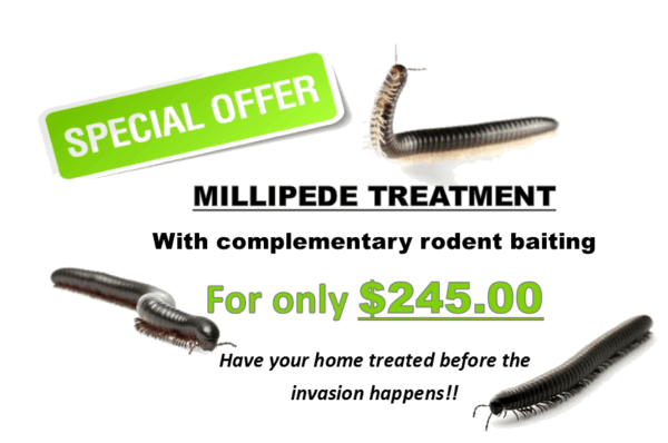 Millipede pest control Perth