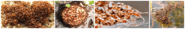Ant Pest Solutions